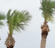 Palm Tree Removal Sydney