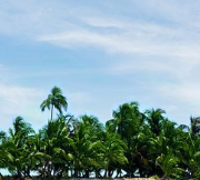 Palm Tree Removal Hire Brisbane