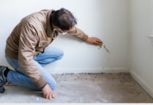 pre-purchase building inspections company Adelaide